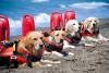 Sociale - Cani soccorritori (Foto internet)