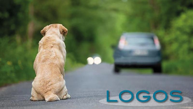 Sociale - Abbandono di animali (Foto internet)