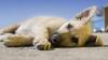 Sociale - Abbandono animali (Foto internet)
