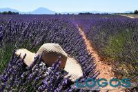 Viaggi - Provence-Alpes-Côte d'Azur