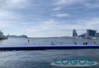 Sport - Gare di nuoto in Corea