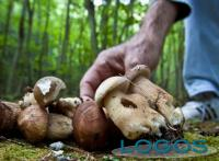 Attualità - Raccolta funghi (Foto internet)