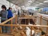 Eventi - Mostra avicola (Foto internet)