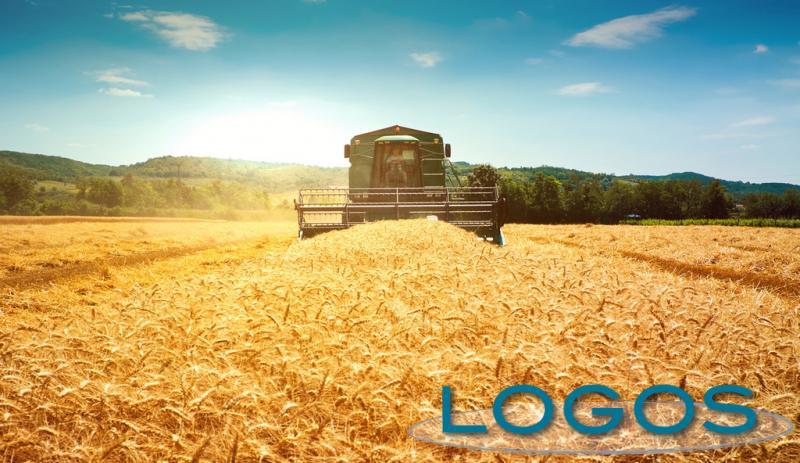 Raccolto-agricoltura.jpg