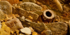 Generica - Beni archeologici (da internet)