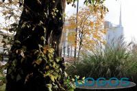 Milano - Si piantano gli alberi (da internet)