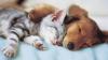 Attualità - Gatti e cani (Foto internet)