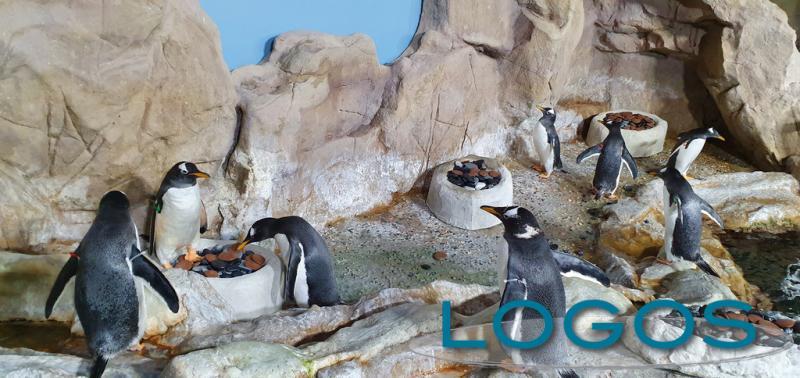2020 Acquario di genova posizionamento nidi pinguini papua_093925.jpg