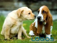 Generica - Cani da compagnia (foto internet)