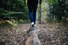 Territorio - Passeggiata nel bosco (Foto internet)