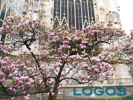 Milano - Primavera milanese 2020
