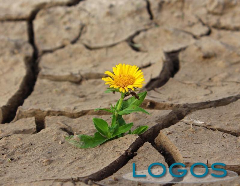 Generica - Fiore che cresce nel deserto