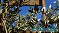 Sociale - Domenica delle Palme (foto internet)