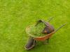 Territorio - Ritiro del verde (Foto internet)