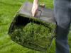 Ambiente - Raccolta del verde (foto internet)