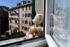 Sociale - Orse alla finestra in quarantena (foto internet)