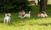 Generica - Arae cani (foto internet)