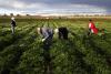Territorio - Lavoro nei campi (Foto internet)