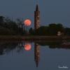 Novara - La foto sulle risaie premiata dalla NASA