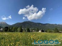 Valle Vigezzo - Campi in fiore d'estate (foto internet)
