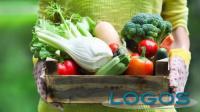 Commercio - Spesa del contadino (Foto internet)