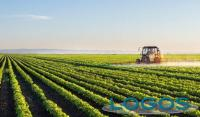 Ambiente - Agricoltura (Foto internet)