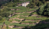 Territorio - Terrazzamenti e muretti a secco (Foto internet)