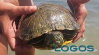 Ambiente - Tartaruga (Foto internet)