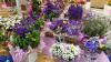 Ambiente - Fiori e piante (Foto internet)