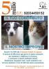 Sociale - 5x1000 per la Protezione Animali di Legnano