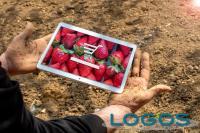 Commercio - App per acquisti agroalimentari