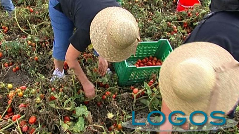 Territorio - Lavoratori nei campi (Foto internet)