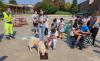Eventi - 'Cani Volanti'