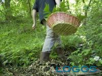 Attualità - Scatta la 'corsa' ai funghi (Foto internet)