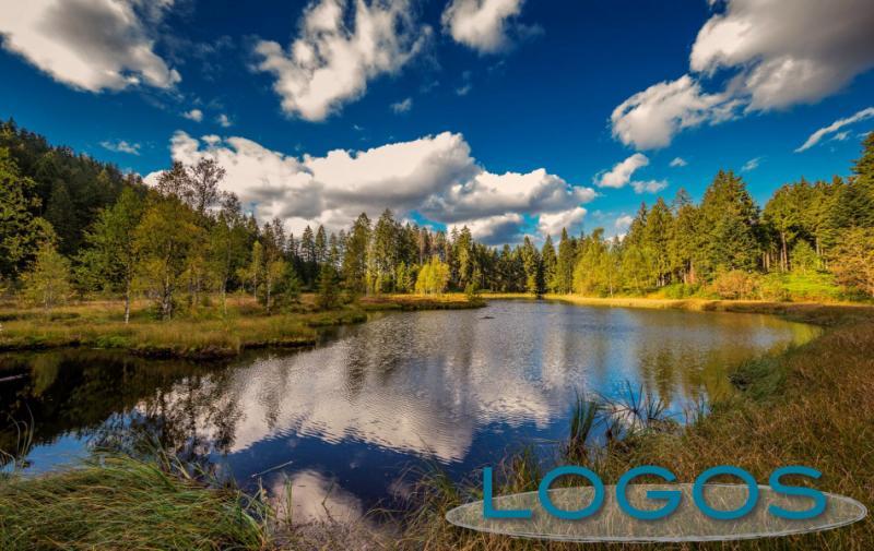 Viaggi - La Foresta Nera, un laghetto