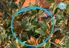 Territorio - Recuperato un pappagallo Ara