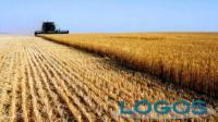 Territorio - Imprese agricole (Foto internet)