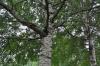Ambiente - Patrimonio arboreo (Foto internet)