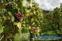 Sapori - Vineria agricola (Foto internet)