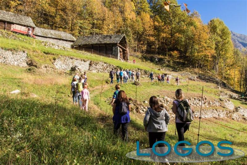 Crodo - BiancoLatte 2017