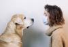 Inchieste - Cani per far fronte al Covid? (Foto internet)