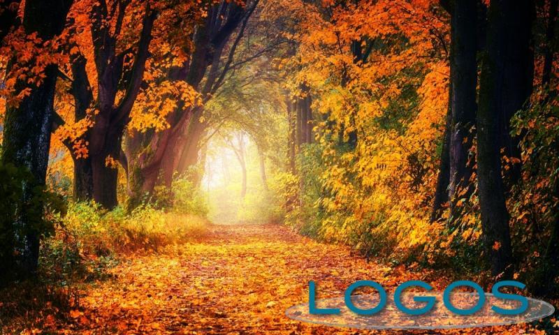 Ambiente - Foliage (Foto internet)