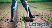 Territorio - Agricoltura (Foto internet)