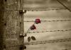 Attualità - Giorno della Memoria (Foto internet)