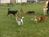 Generica - Area cani (foto internet)