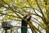 Territorio - Potature alberi (Foto internet)