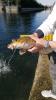Territorio - Uno dei pesci recuperati e salvati nel Naviglio