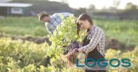 Ambiente - Agricoltori (Foto internet)