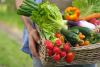 Commercio - Frutta e verdura a domicilio (Foto internet)