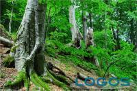 Ambiente - Boschi (Foto internet)